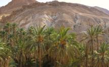 Bergoase Chebika